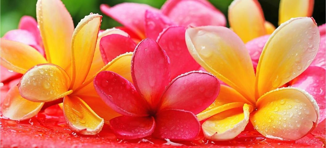 ハワイ旅行中の人工透析(Dialysis)トップページ花